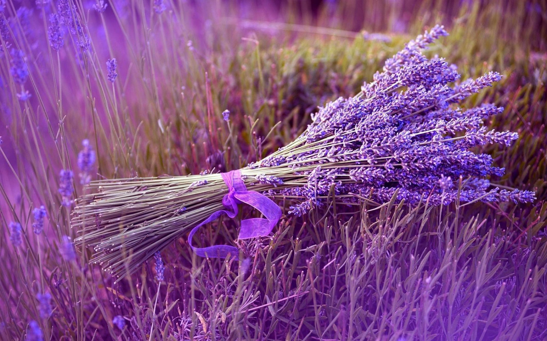 Lavender...  Lots of it.