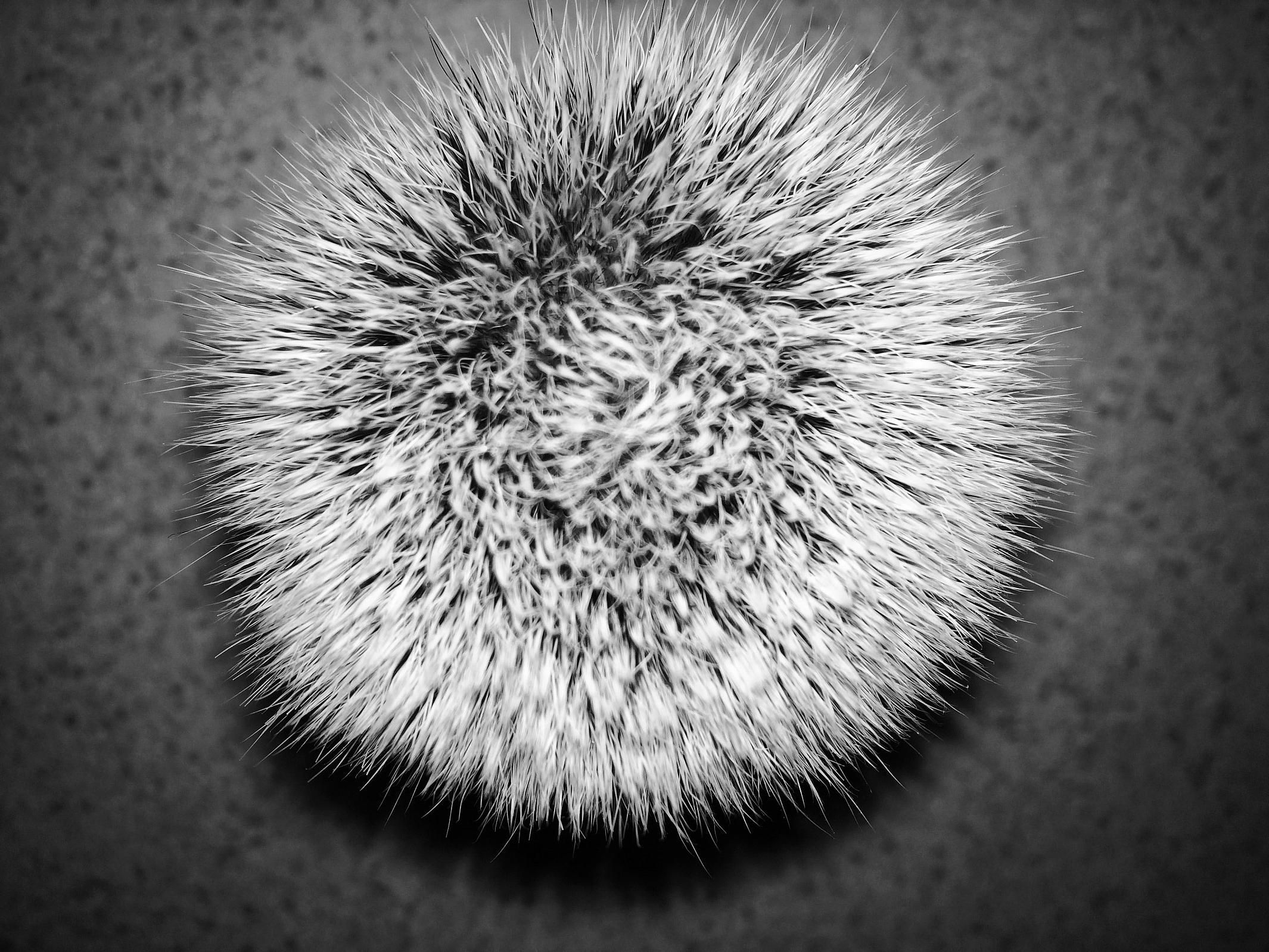 A whorl in a synthetic knot